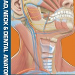 Head, Neck and Dental Anatomy, 4th Edition