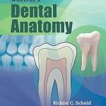 Woelfels Dental Anatomy, 9th Edition