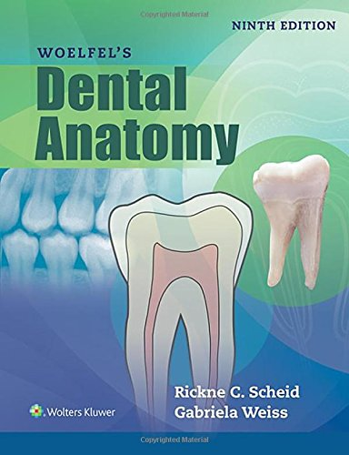 anatomy dental