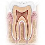 Miniatlas Dentistry